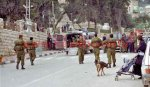 [ahmad]Golani with Dogs in Hebron, 1998