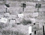 numbered_graves